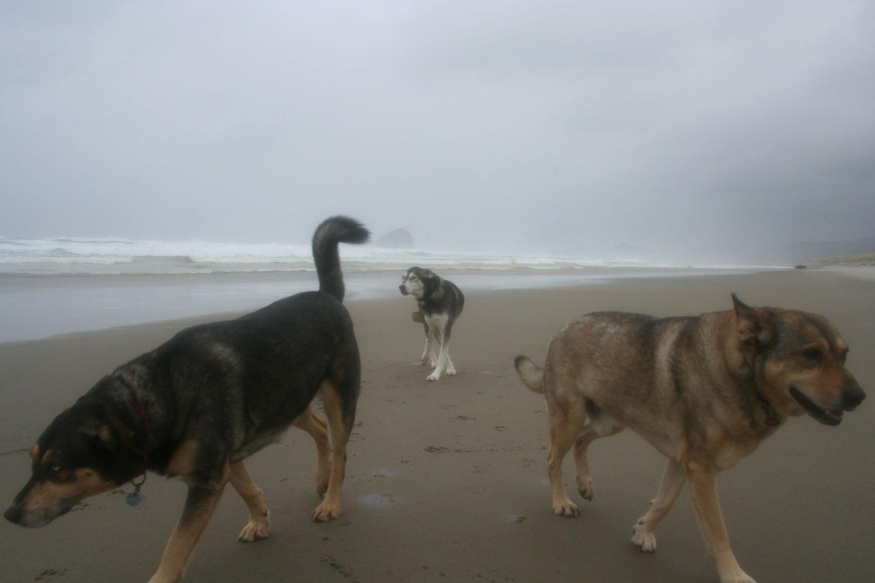 threedogsspit