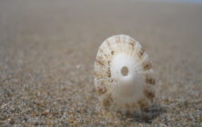 love_sunny_limpets 026