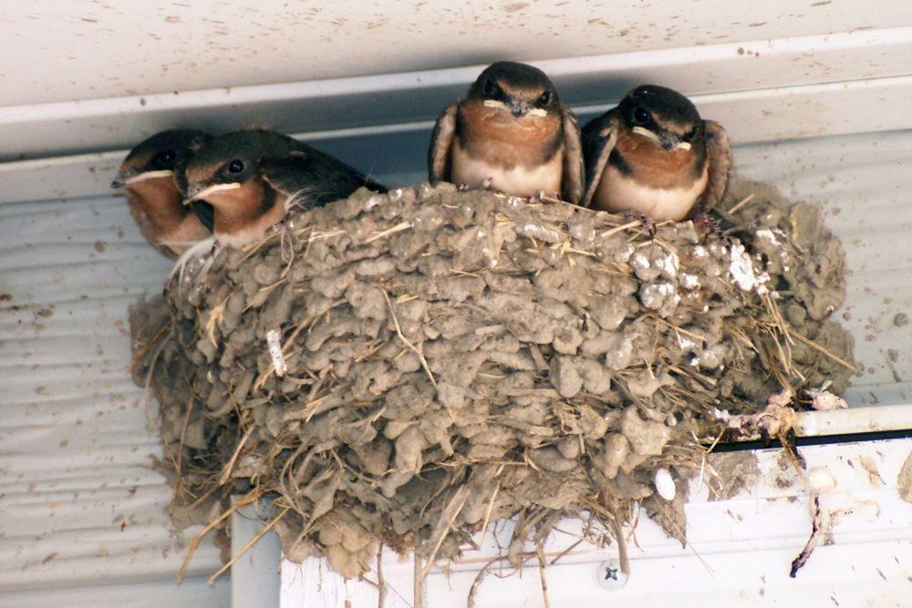 Home-Barn-Swallow-House