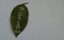 leaffalls