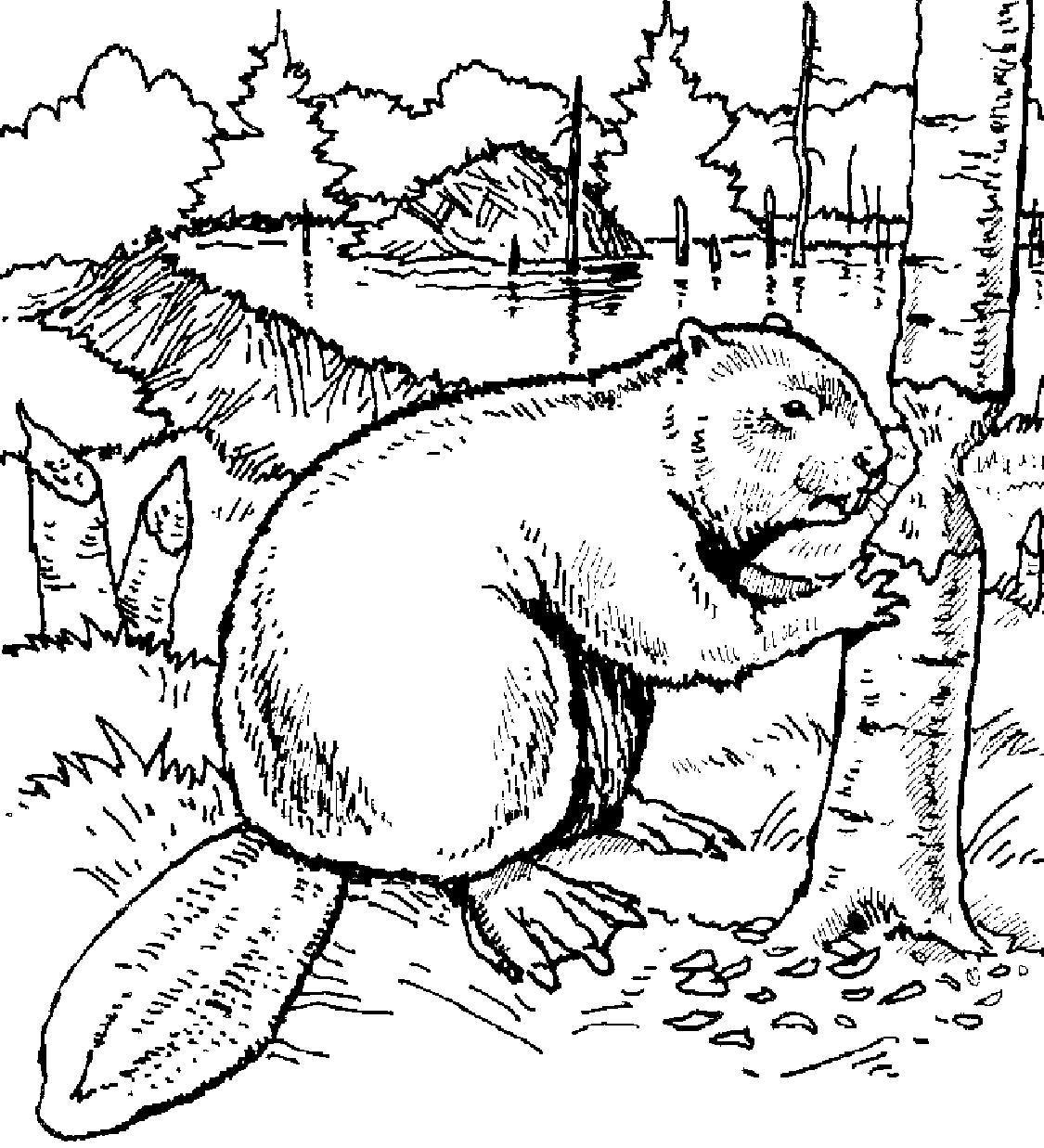 beavercoloringbook