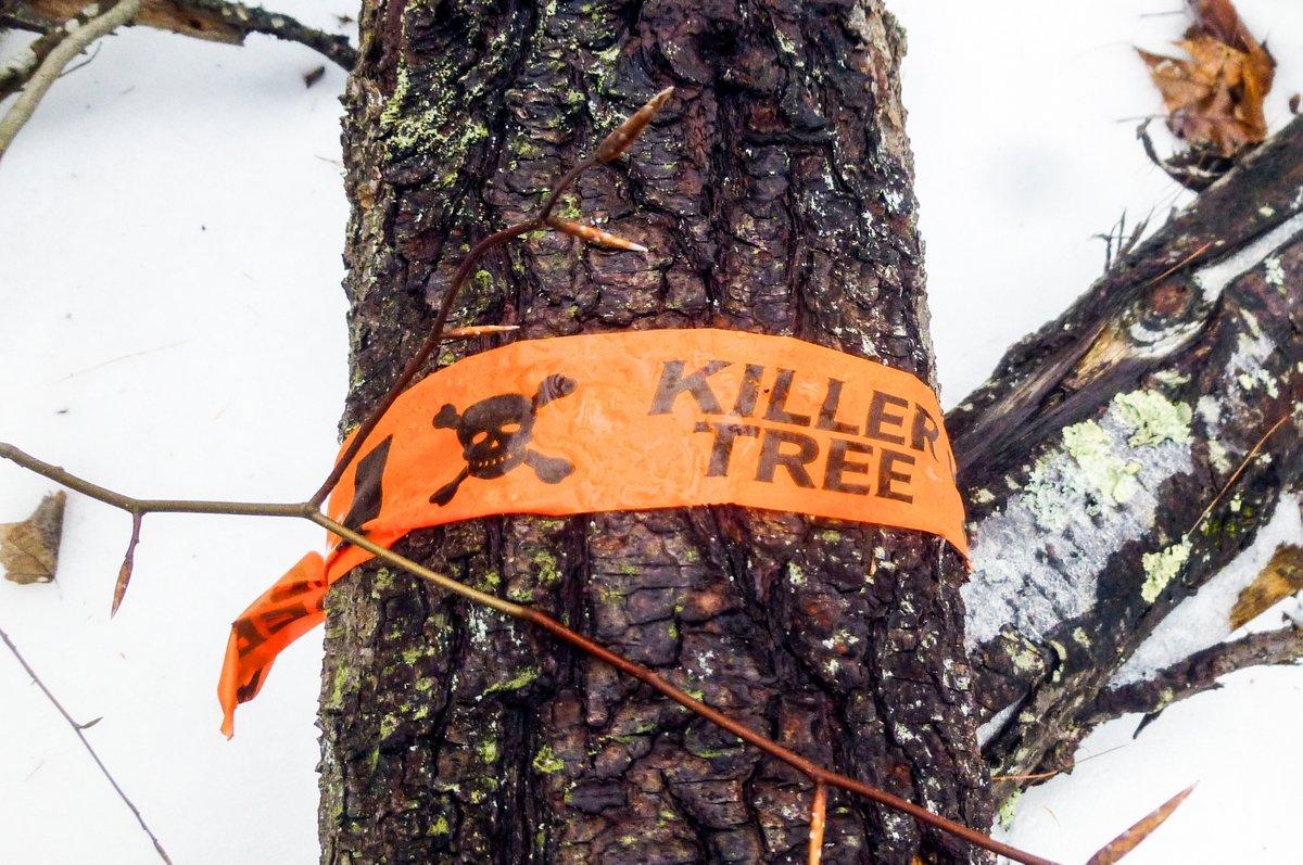 treekiller